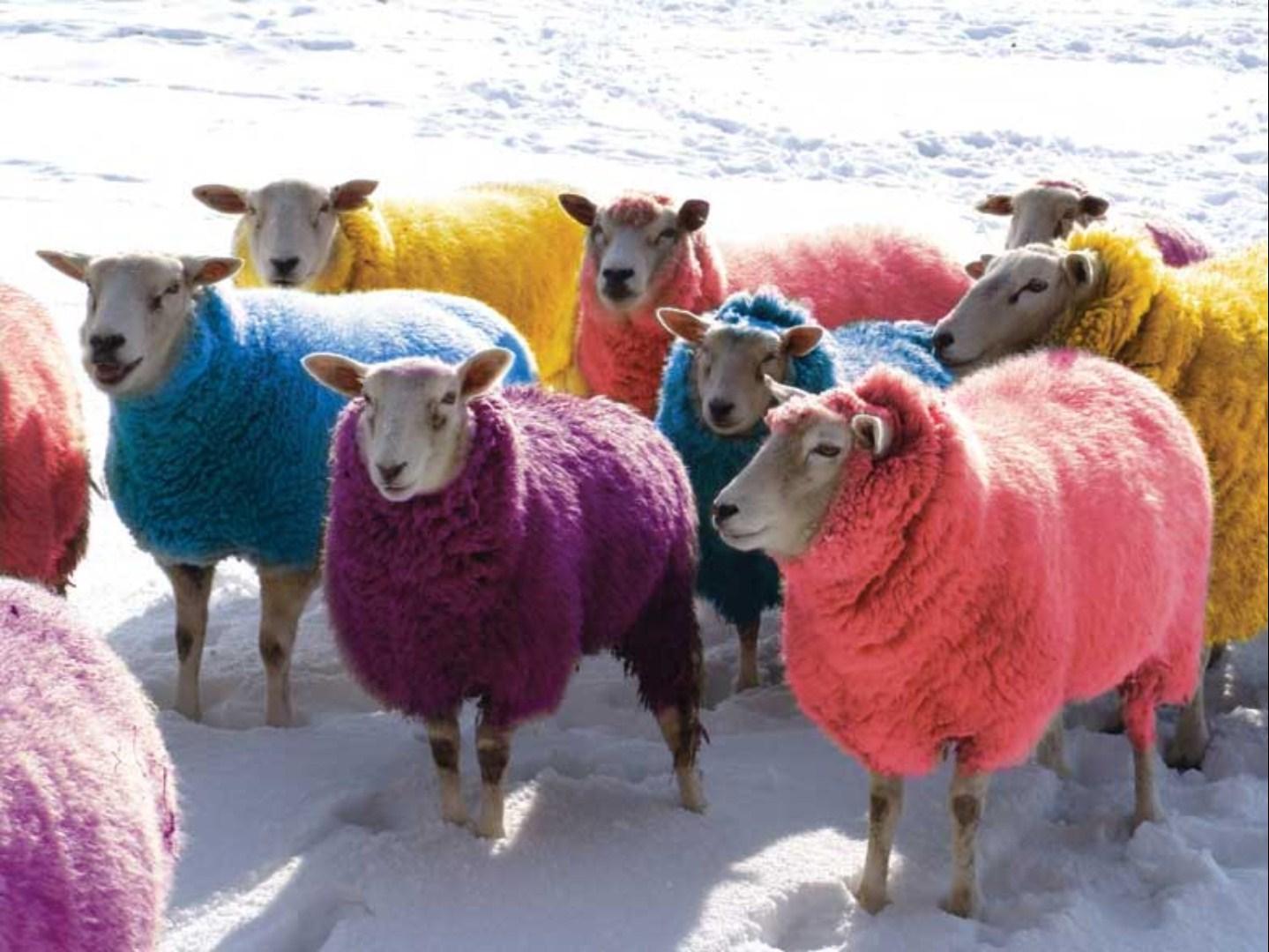 coloured sheep wool rug.jpg